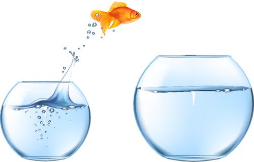 goldfish-jumpin